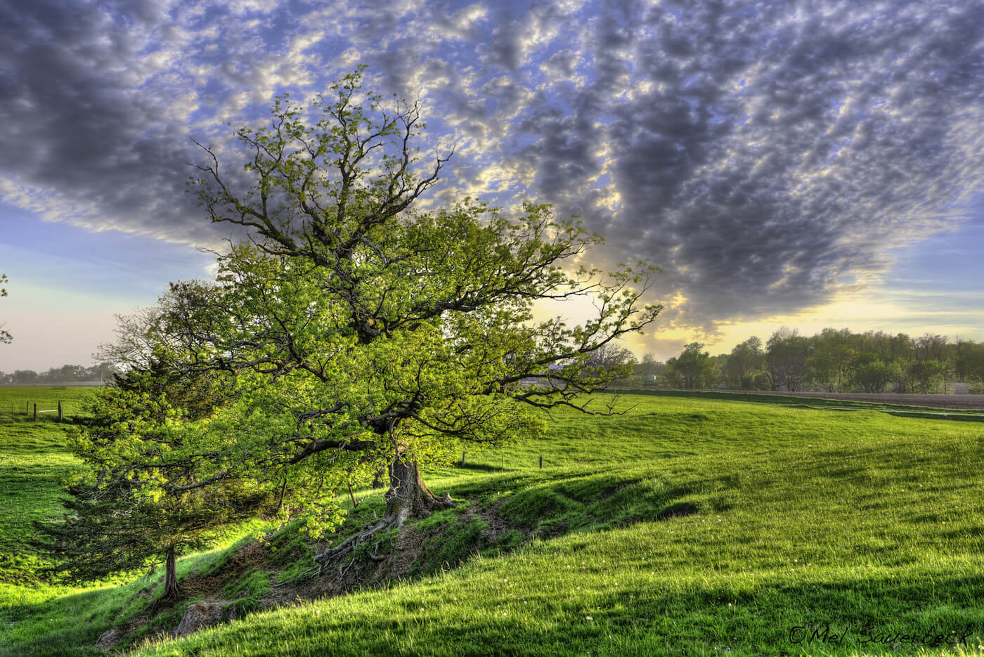 Glowing sunset view with large bent tree in foreground, deep green grass stretching to distant treelike and dramatic blue and grey clouds across the full sky. High dynamic range photo, HDR