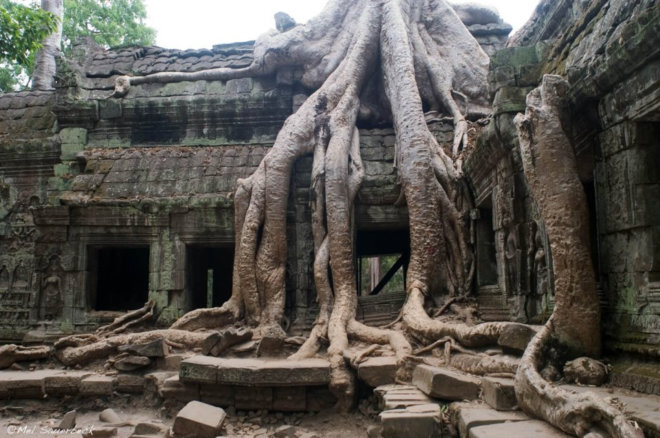 Ancient tree covered temple, Angkor Wat, Cambodia