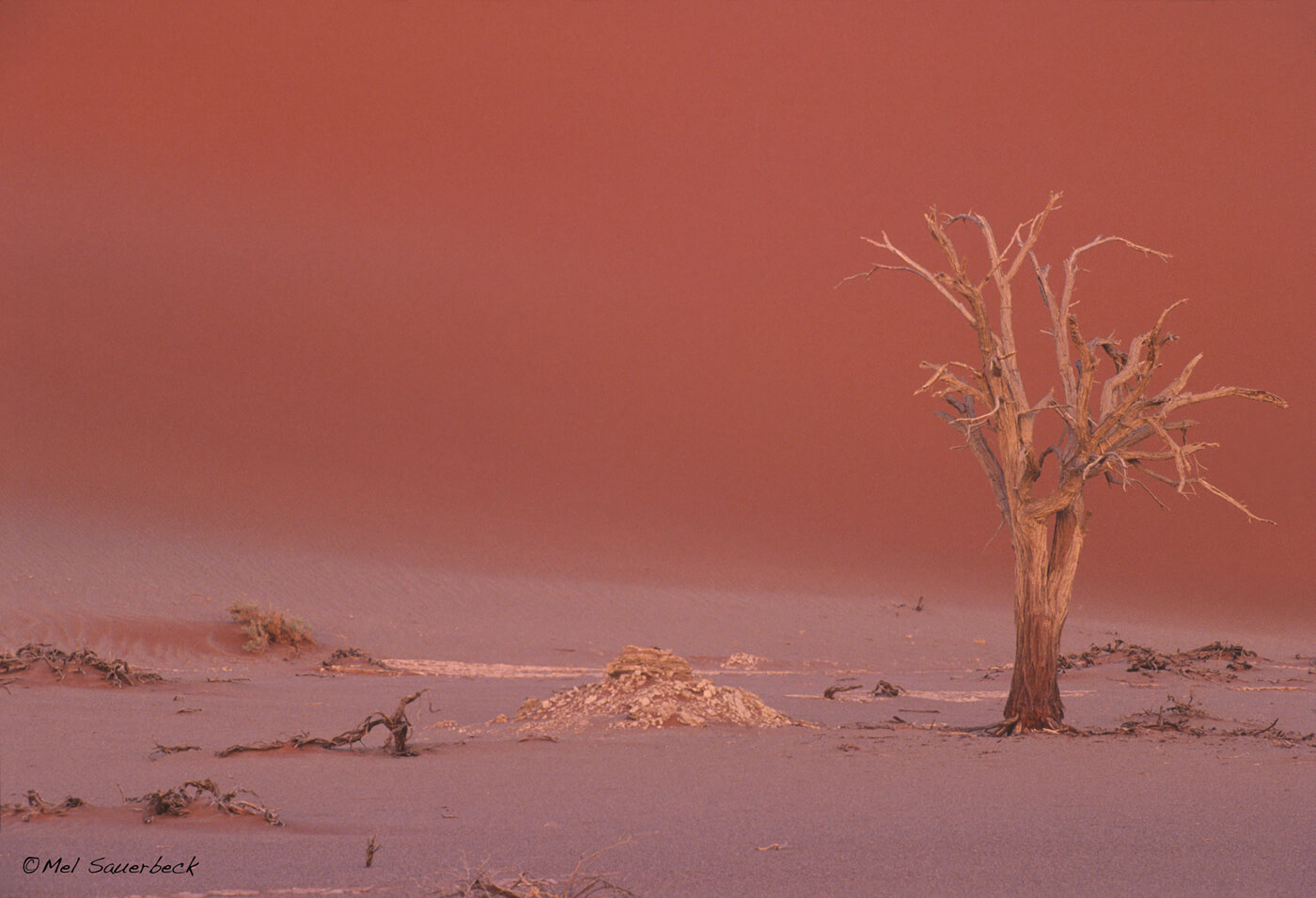 Tree in Pan, Namibia Desert