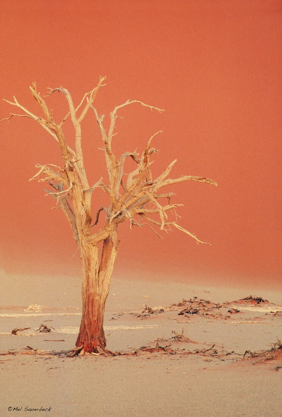 Namib Tree