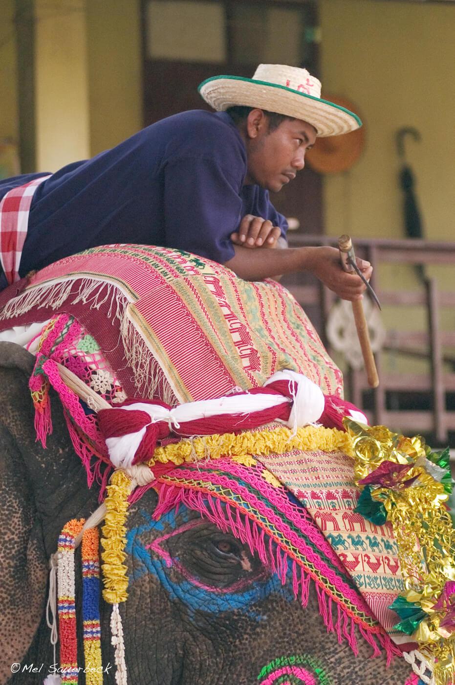 Elephant and handler, Thailand
